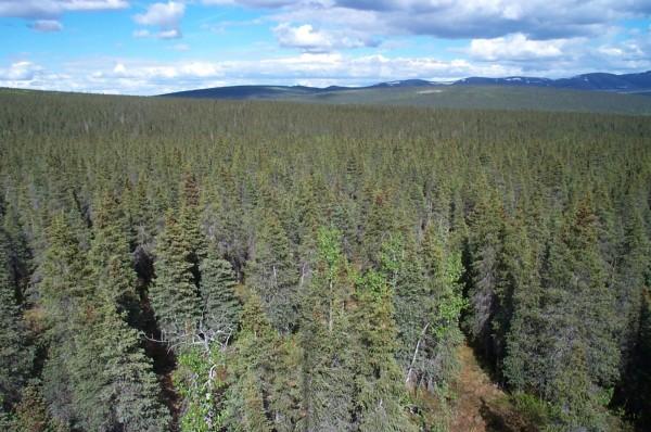 Лесные Просмотры