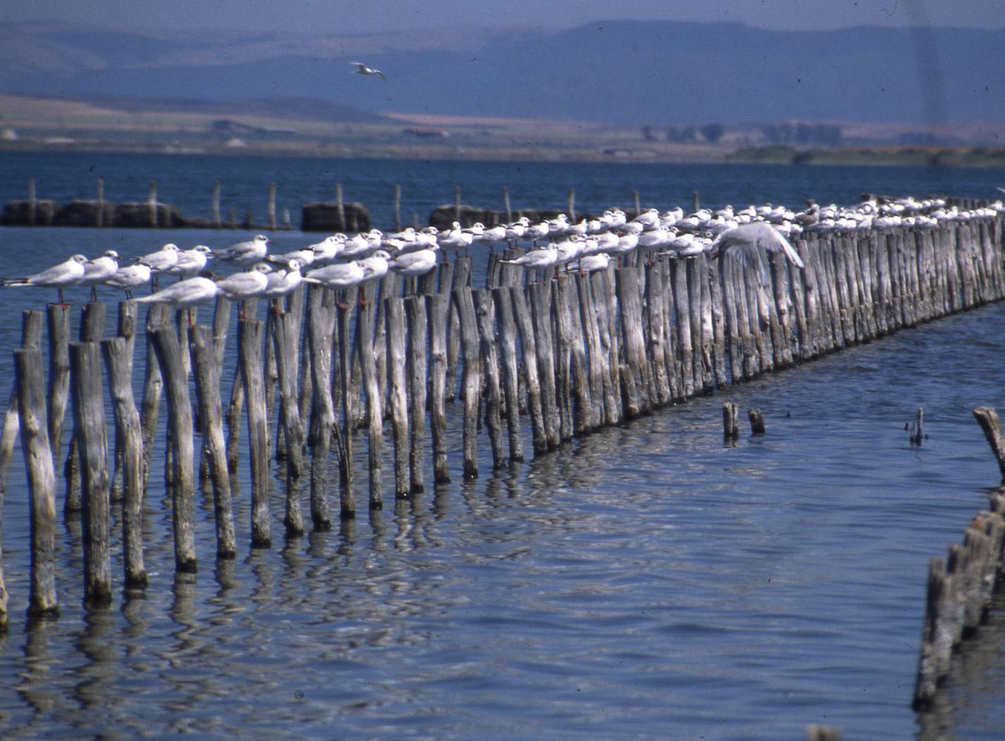 Поморие соленое озеро
