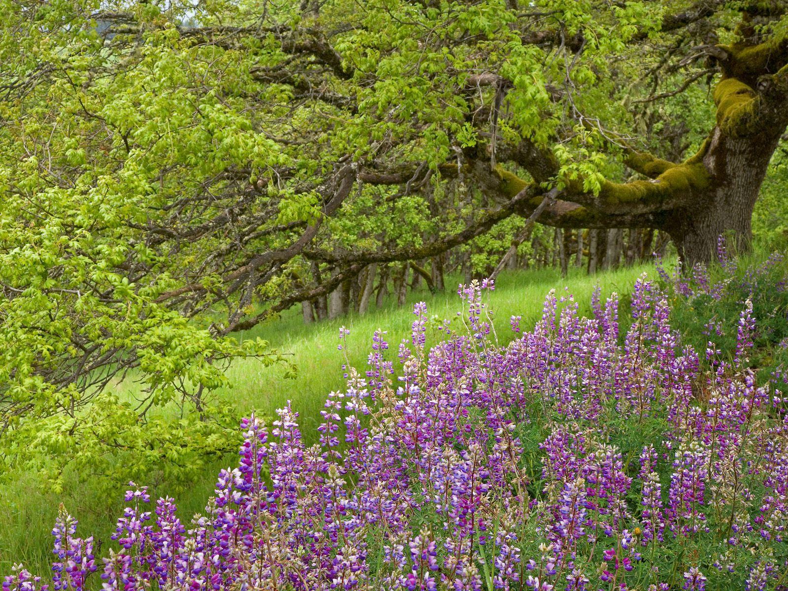 Природа в Болгарии